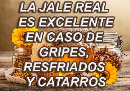 jalea-real-2