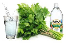 agua-vinagre-cilantro